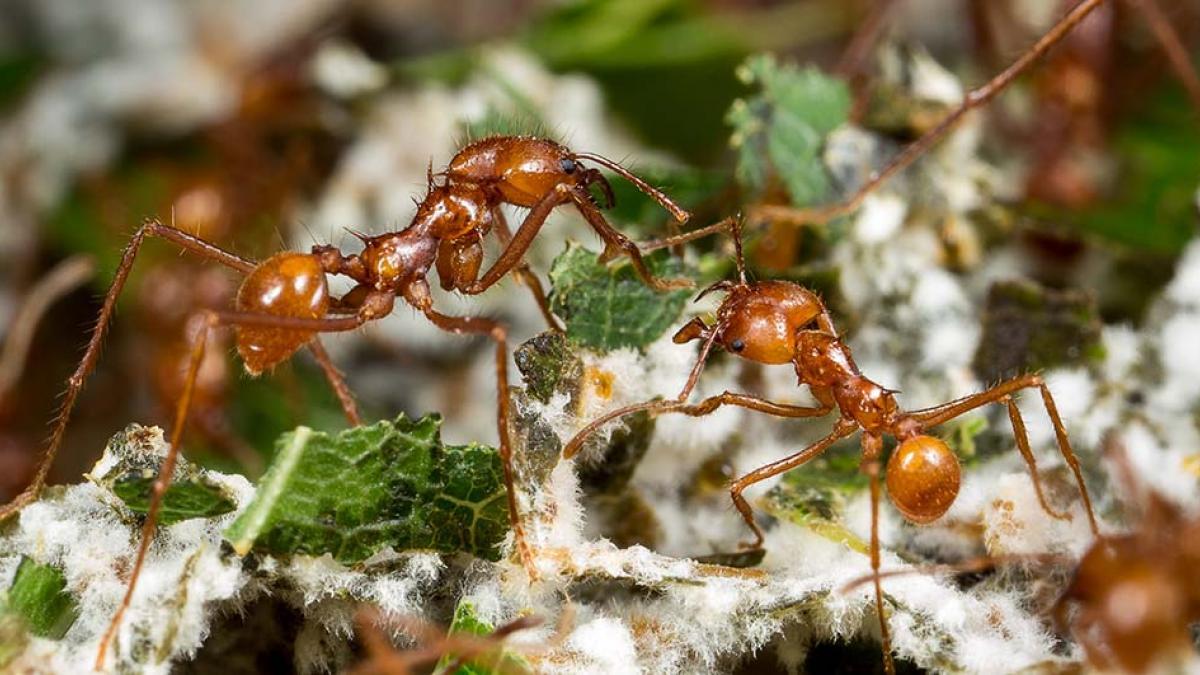 муравьи в саду картинки природе всегда есть